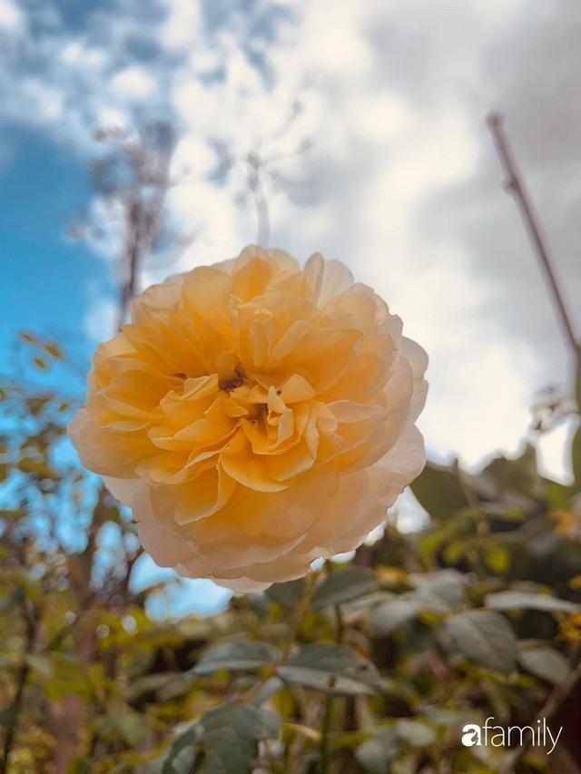 Ngôi nhà gần trăm năm tuổi bên cạnh khu vườn hoa hồng gói gọn những lặng lẽ, yên bình của xứ Huế mộng mơ - Ảnh 36.