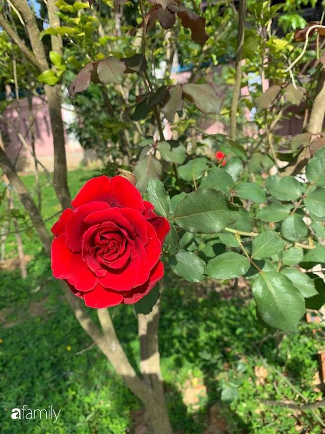 Ngôi nhà gần trăm năm tuổi bên cạnh khu vườn hoa hồng gói gọn những lặng lẽ, yên bình của xứ Huế mộng mơ - Ảnh 37.
