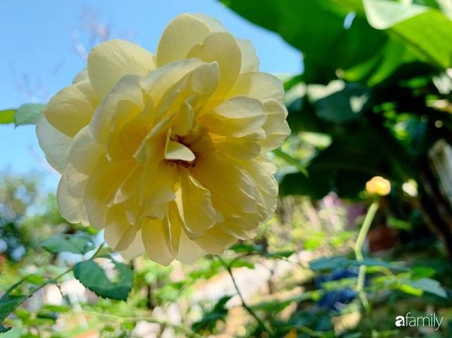 Ngôi nhà gần trăm năm tuổi bên cạnh khu vườn hoa hồng gói gọn những lặng lẽ, yên bình của xứ Huế mộng mơ - Ảnh 39.