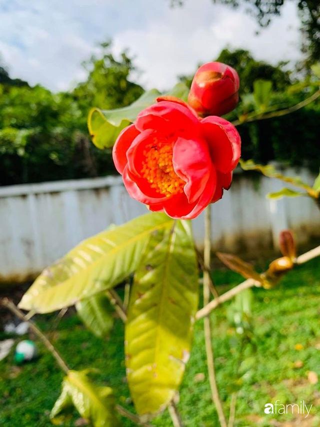 Ngôi nhà gần trăm năm tuổi bên cạnh khu vườn hoa hồng gói gọn những lặng lẽ, yên bình của xứ Huế mộng mơ - Ảnh 40.