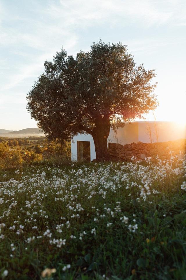 Căn nhà cấp 4  màu trắng nổi bật giữa thiên nhiên hoang sơ với cách thiết kế rất sinh động - Ảnh 9.