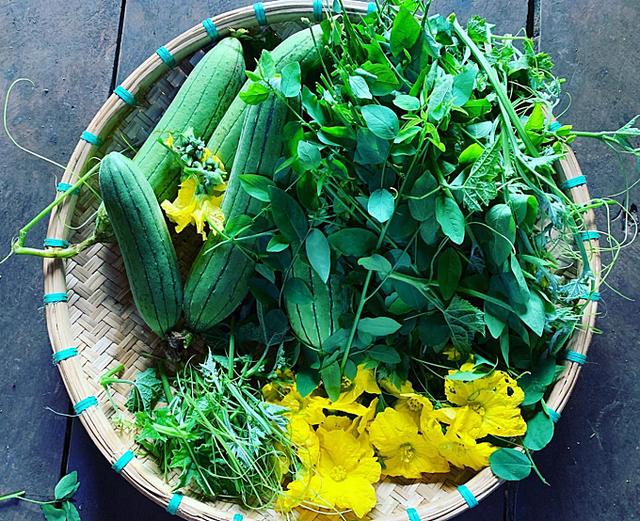 Hoa hậu HHen Niê mải mê thu hoạch rau trái trong vườn, rẫy - Ảnh 3.