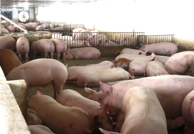 Tuyên bố giảm giá mà thịt lợn vẫn quá đắt, có người đang ăn lãi đậm - Ảnh 1.