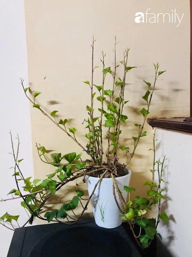Mẹ đảm tại Hà Nội trang trí nhà theo cách ít ai ngờ tới nhờ tận dụng những loại cây hết sức bình thường, chị em đang nghỉ ở nhà dài ngày chỉ việc học theo - Ảnh 2.