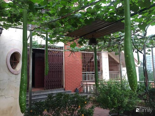 Mẹ đảm mát tay trồng đủ loại cây trái tốt tươi trên sân thượng ở Hà Nội - Ảnh 1.