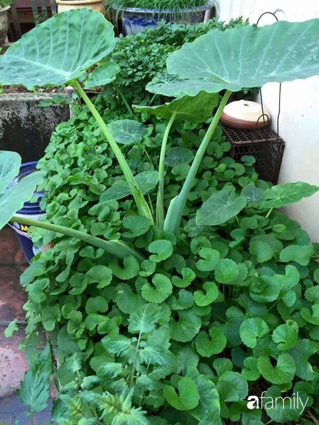 Mẹ đảm mát tay trồng đủ loại cây trái tốt tươi trên sân thượng ở Hà Nội - Ảnh 11.