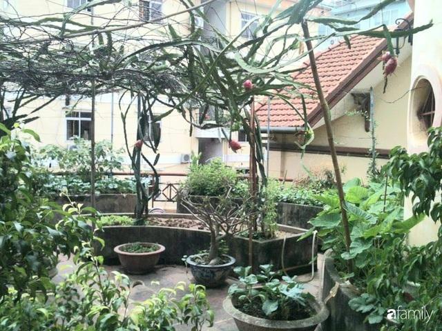 Mẹ đảm mát tay trồng đủ loại cây trái tốt tươi trên sân thượng ở Hà Nội - Ảnh 14.