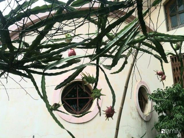 Mẹ đảm mát tay trồng đủ loại cây trái tốt tươi trên sân thượng ở Hà Nội - Ảnh 16.