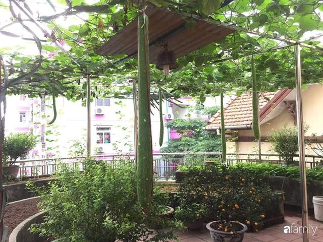 Mẹ đảm mát tay trồng đủ loại cây trái tốt tươi trên sân thượng ở Hà Nội - Ảnh 20.