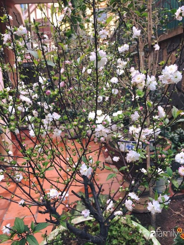 Mẹ đảm mát tay trồng đủ loại cây trái tốt tươi trên sân thượng ở Hà Nội - Ảnh 22.