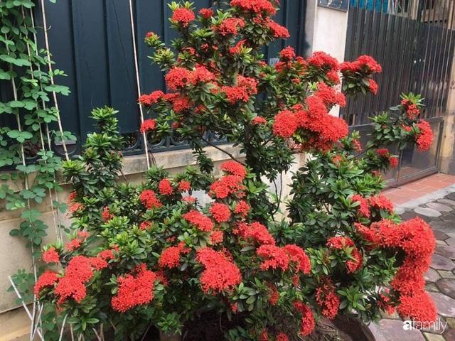 Mẹ đảm mát tay trồng đủ loại cây trái tốt tươi trên sân thượng ở Hà Nội - Ảnh 23.