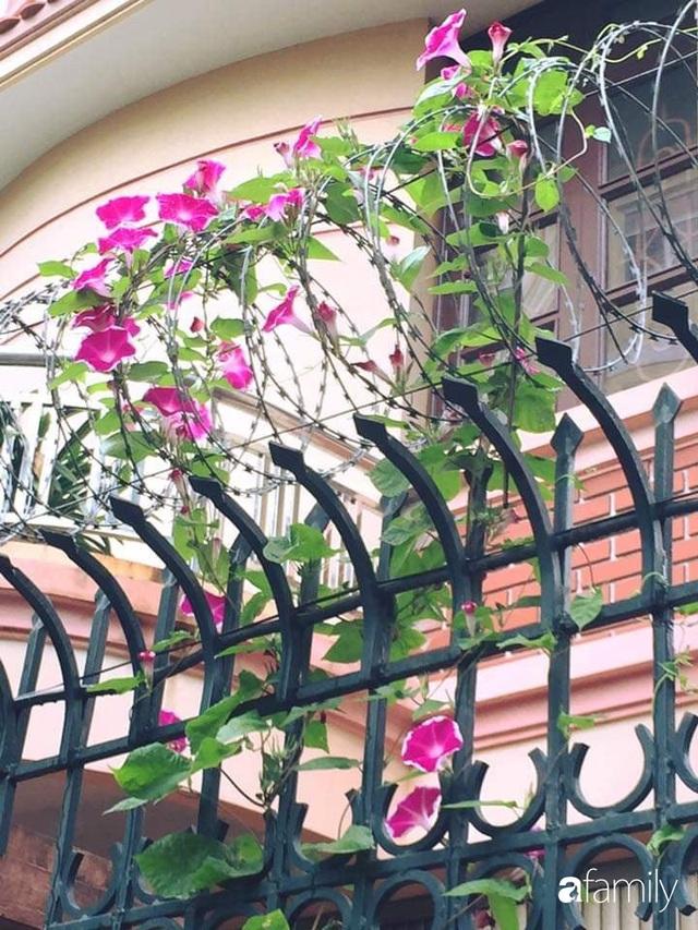 Mẹ đảm mát tay trồng đủ loại cây trái tốt tươi trên sân thượng ở Hà Nội - Ảnh 24.
