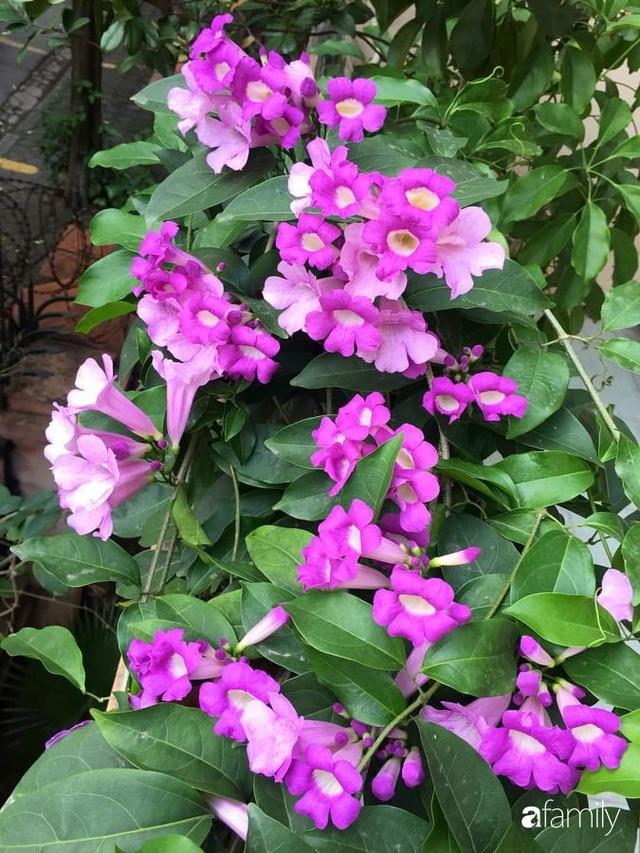 Mẹ đảm mát tay trồng đủ loại cây trái tốt tươi trên sân thượng ở Hà Nội - Ảnh 25.