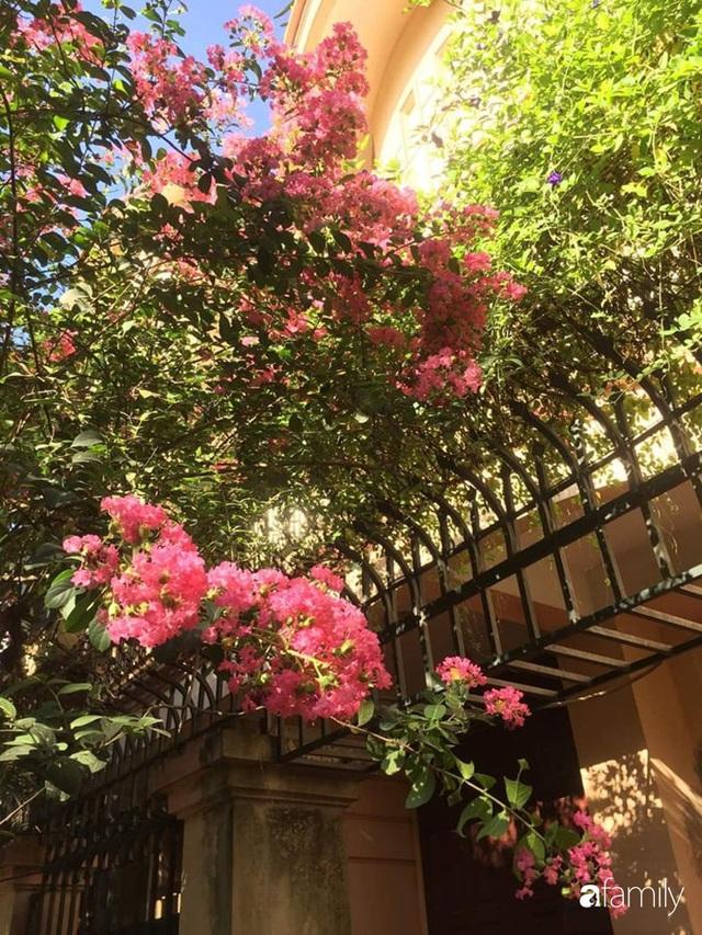 Mẹ đảm mát tay trồng đủ loại cây trái tốt tươi trên sân thượng ở Hà Nội - Ảnh 26.