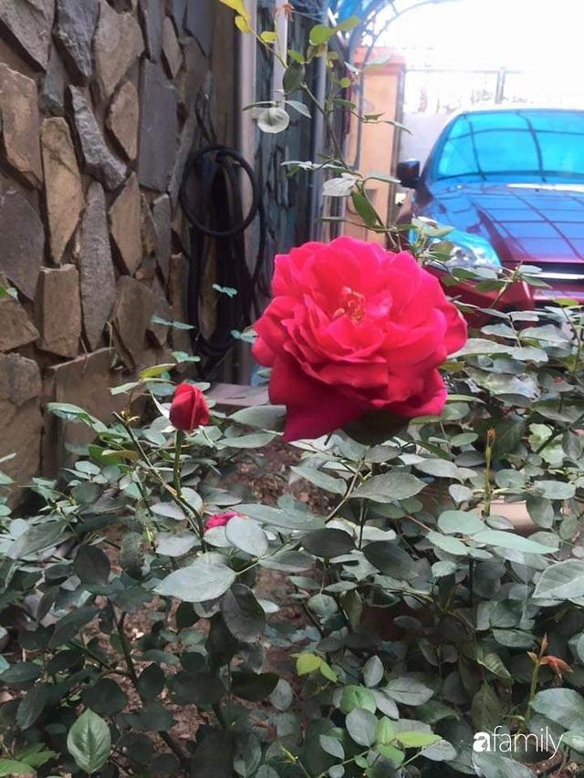 Mẹ đảm mát tay trồng đủ loại cây trái tốt tươi trên sân thượng ở Hà Nội - Ảnh 27.