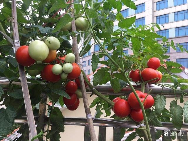Mẹ đảm mát tay trồng đủ loại cây trái tốt tươi trên sân thượng ở Hà Nội - Ảnh 4.