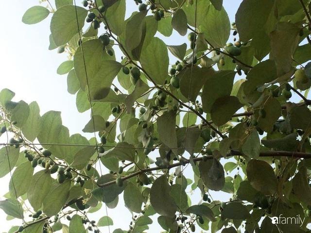 Mẹ đảm mát tay trồng đủ loại cây trái tốt tươi trên sân thượng ở Hà Nội - Ảnh 7.