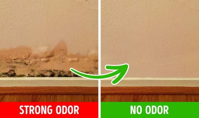 6 lý do khiến nhà bạn có mùi hôi khó chịu và cách khắc phục nhanh chóng, hiệu quả - Ảnh 2.
