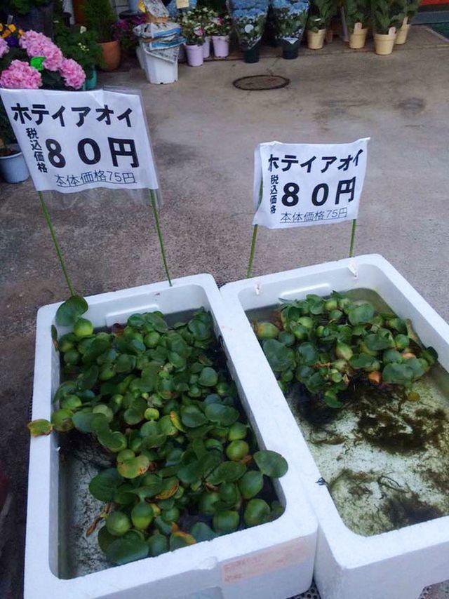 """Những loại cây quả mọc dại ở Việt Nam """"bán không ai mua"""" nhưng sang nước ngoài lại có giá cực đắt, còn được săn lùng đến """"cháy hàng"""" - Ảnh 7."""