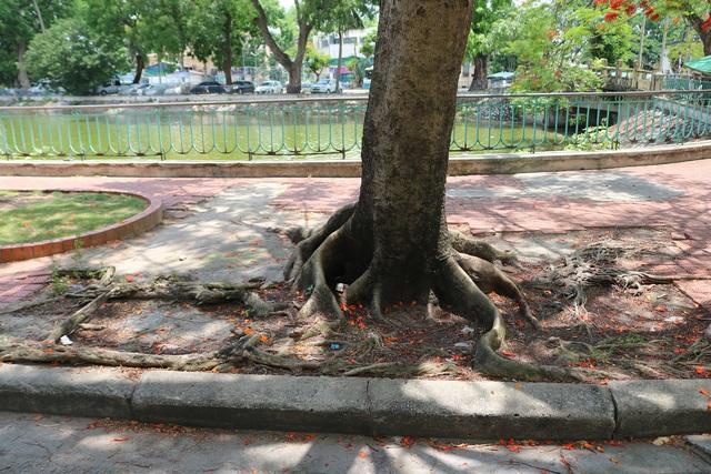 Giật mình với những cây phượng mục ruỗng giữa lòng thành phố Cảng - Ảnh 7.