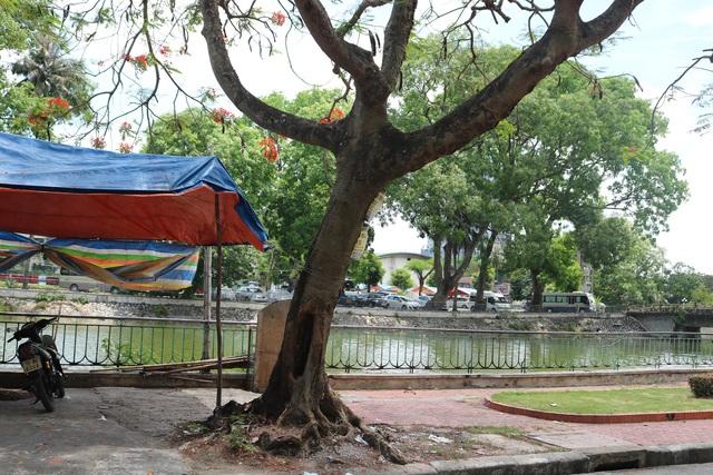 Giật mình với những cây phượng mục ruỗng giữa lòng thành phố Cảng - Ảnh 6.
