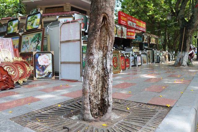 Giật mình với những cây phượng mục ruỗng giữa lòng thành phố Cảng - Ảnh 17.