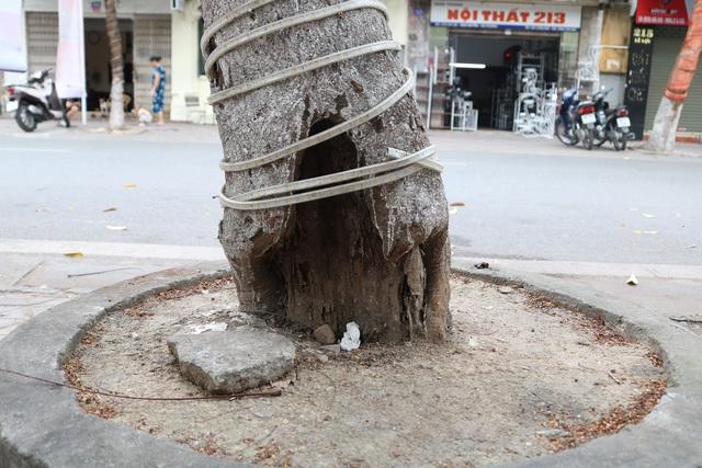 Giật mình với những cây phượng mục ruỗng giữa lòng thành phố Cảng - Ảnh 12.