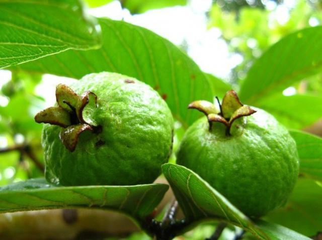 Rất nhiều người bỏ hạt đi khi ăn loại quả này vì sợ táo bón, đó là một sai lầm nghiêm trọng - Ảnh 2.
