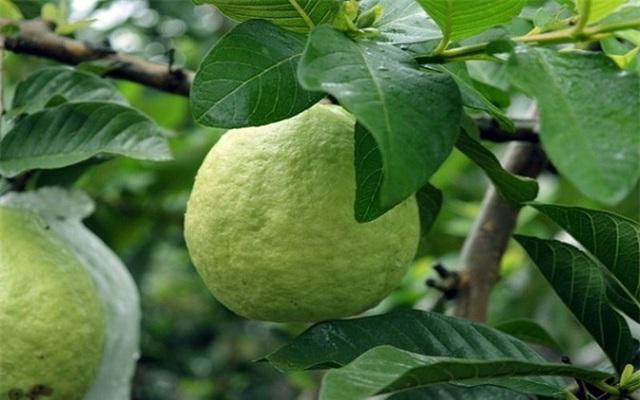 Rất nhiều người bỏ hạt đi khi ăn loại quả này vì sợ táo bón, đó là một sai lầm nghiêm trọng - Ảnh 4.