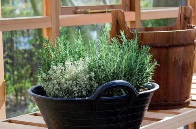 Để 4 loại cây này trong nhà, vừa hợp phong thủy vừa đảm bảo không còn con muỗi nào bén mảng - Ảnh 4.