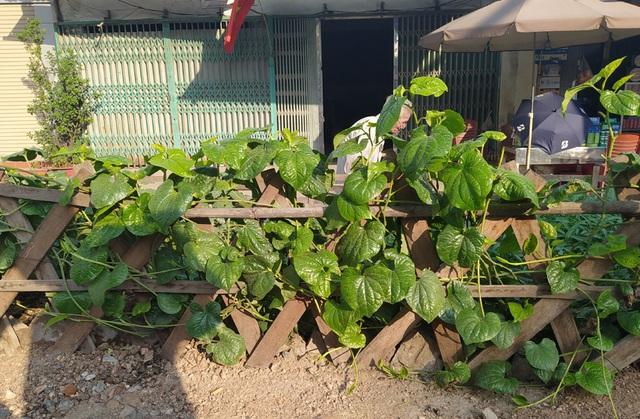 Đường sắt Cát Linh - Hà Đông chưa hẹn ngày vận hành, nhưng dân có thể... trồng rau, nuôi gà ngay phía dưới - Ảnh 3.