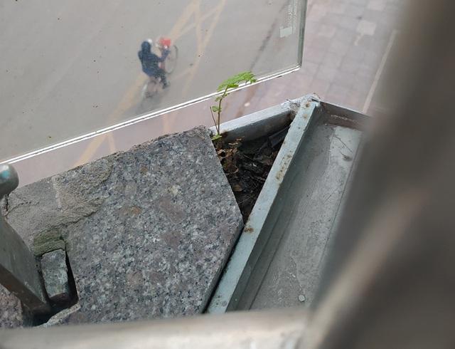 Đường sắt Cát Linh - Hà Đông chưa hẹn ngày vận hành, nhưng dân có thể... trồng rau, nuôi gà ngay phía dưới - Ảnh 12.