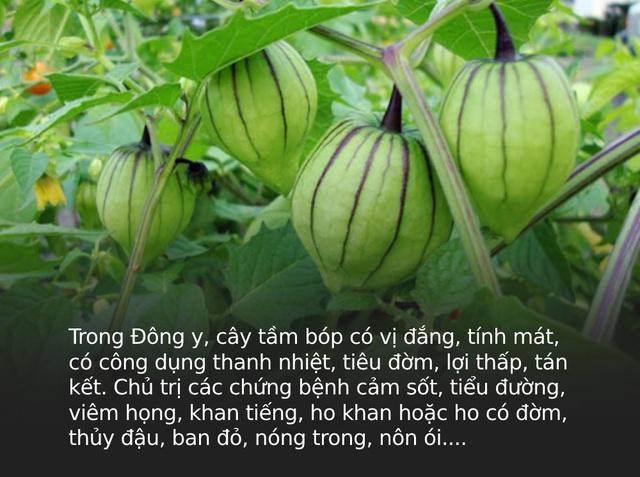 Đây là loại quả mà người Việt chỉ coi là cỏ dại, sang Nhật được tôn như thảo dược quý chữa đủ thứ bệnh - Ảnh 4.