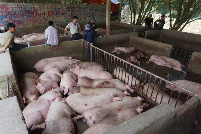 Chợ đầu mối lợn hơi ế ẩm, tiểu thương ngồi đuổi ruồi vì giá quá cao - Ảnh 2.