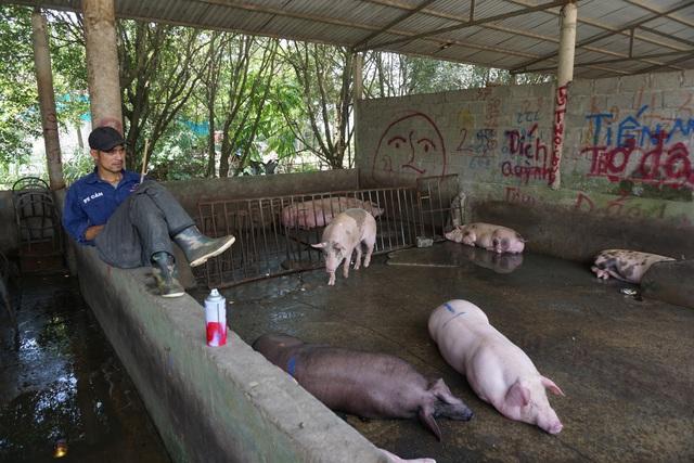 Chợ đầu mối lợn hơi ế ẩm, tiểu thương ngồi đuổi ruồi vì giá quá cao - Ảnh 3.