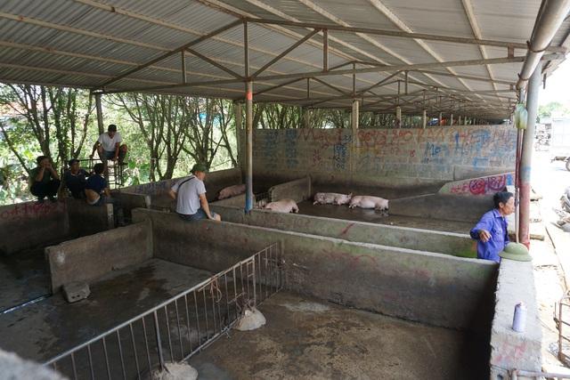 Chợ đầu mối lợn hơi ế ẩm, tiểu thương ngồi đuổi ruồi vì giá quá cao - Ảnh 8.