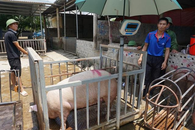Chợ đầu mối lợn hơi ế ẩm, tiểu thương ngồi đuổi ruồi vì giá quá cao - Ảnh 9.