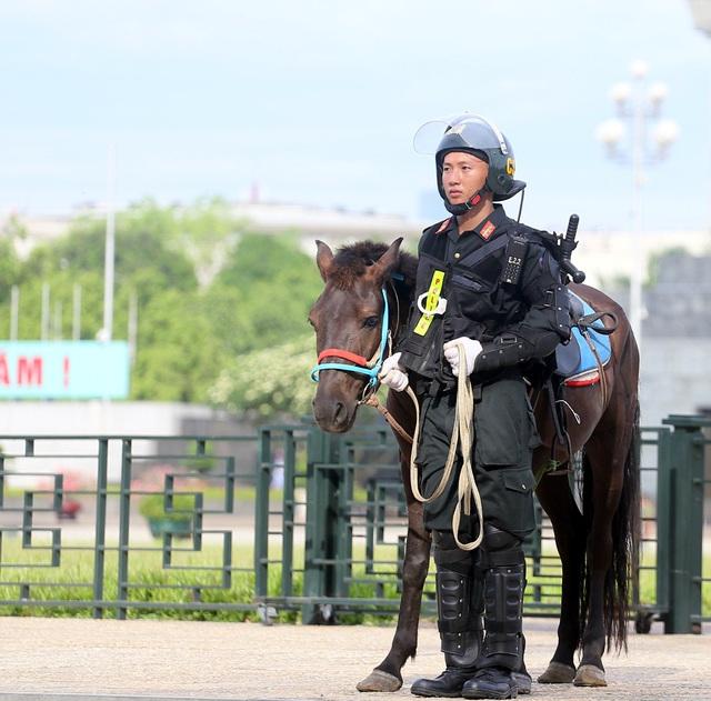 Có thể sử dụng thêm giống ngựa Bắc Hà để xây dựng Đoàn Cảnh sát cơ động kỵ binh - Ảnh 6.