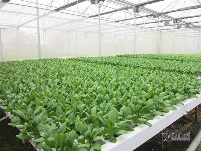 Bỏ ngân hàng về trồng rau, làm vì đam mê thu đều 600 triệu/tháng - Ảnh 4.