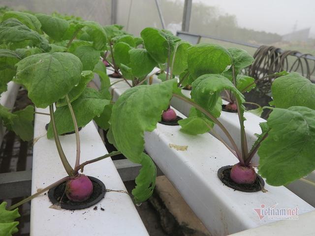 Bỏ ngân hàng về trồng rau, làm vì đam mê thu đều 600 triệu/tháng - Ảnh 5.