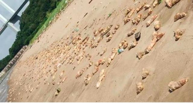 Bí ẩn hàng nghìn chân giò lợn dạt vào bờ biển Trung Quốc - Ảnh 1.