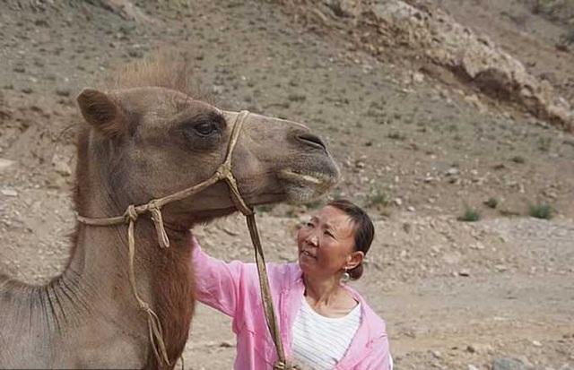 Chú lạc đà vượt 100 km tìm về chủ cũ - Ảnh 2.