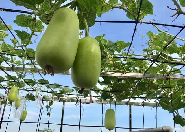 Ngắm khu vườn đủ loại rau quả rộng hơn 100m² trên mái nhà với 100 triệu đồng đầu tư thiết kế của gia đình ở Hà Nội - Ảnh 15.