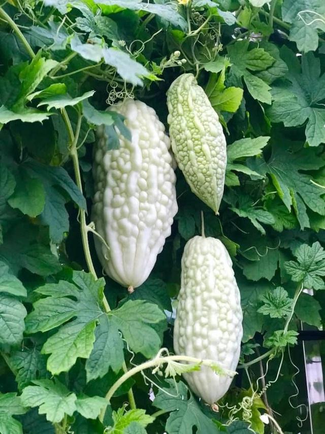 Ngắm khu vườn đủ loại rau quả rộng hơn 100m² trên mái nhà với 100 triệu đồng đầu tư thiết kế của gia đình ở Hà Nội - Ảnh 6.