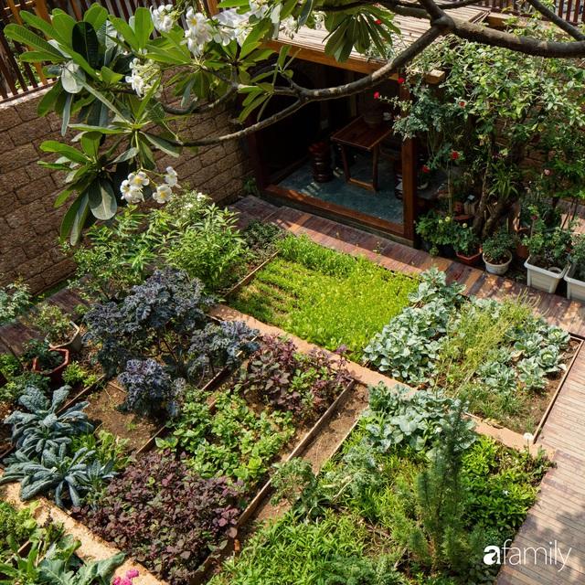 Mảnh vườn 50m² tốt tươi quanh năm nhờ bí quyết trộn đất không giống ai của bà mẹ ở Sài Gòn - Ảnh 2.