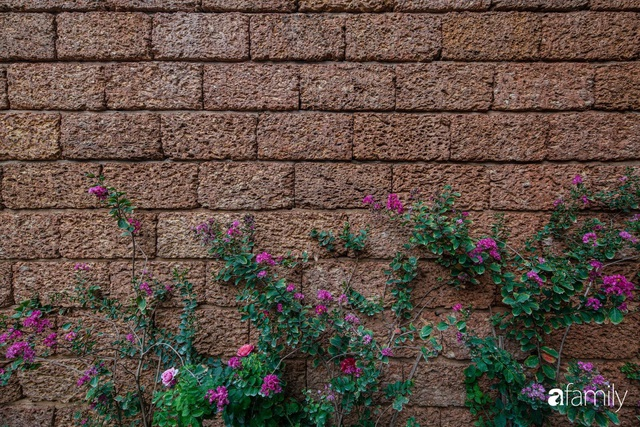 Mảnh vườn 50m² tốt tươi quanh năm nhờ bí quyết trộn đất không giống ai của bà mẹ ở Sài Gòn - Ảnh 12.