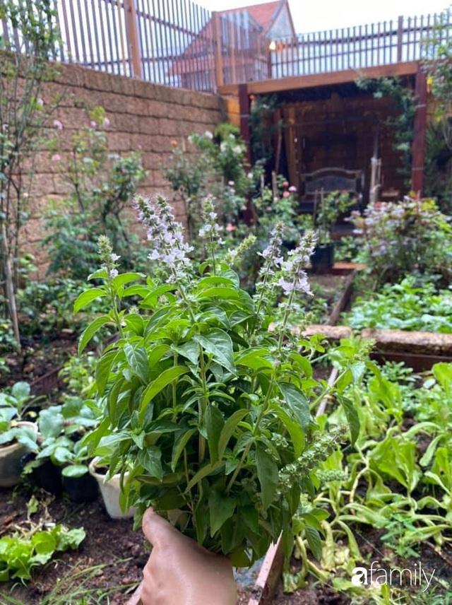 Mảnh vườn 50m² tốt tươi quanh năm nhờ bí quyết trộn đất không giống ai của bà mẹ ở Sài Gòn - Ảnh 9.