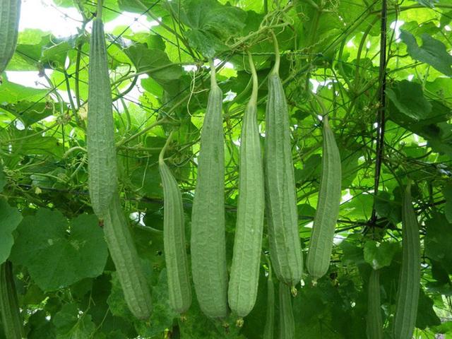 """Những loại rau xanh giúp nam giới bổ sung """"viagra"""" tự nhiên - Ảnh 1."""