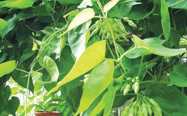 """Những loại rau xanh giúp nam giới bổ sung """"viagra"""" tự nhiên - Ảnh 3."""