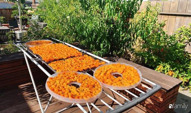 Cuộc sống bình yên, hòa mình cùng thiên nhiên khi trồng rau nuôi gà trong mảnh vườn 650m² của mẹ Việt ở Mỹ - Ảnh 12.